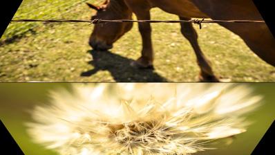 roller photo slideshow